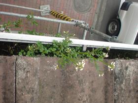 【完工事例】[09.3.24]  東京都町田市S様邸 外壁塗装・屋根塗装・他塗装工事